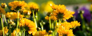 spruce up your yard with flowers