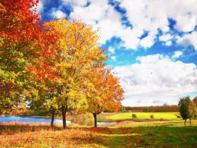 Fall trees by lake