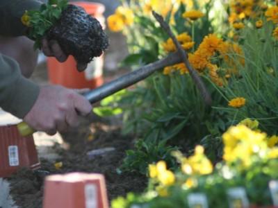 Landscaper working on flower planter