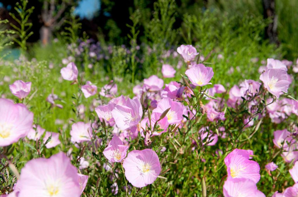 Commercial Landscaping Flowers