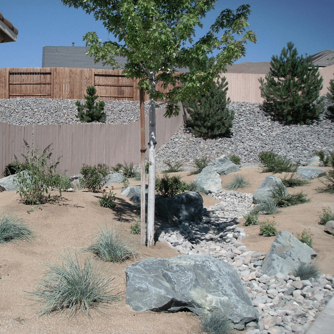 dry creek bed xeriscape
