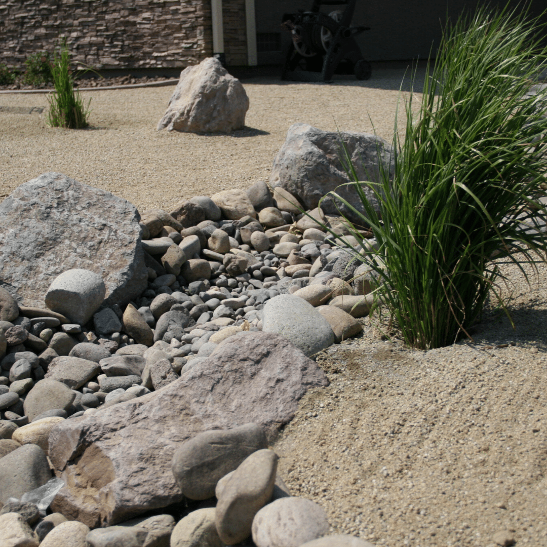 xeriscape dry creed bed