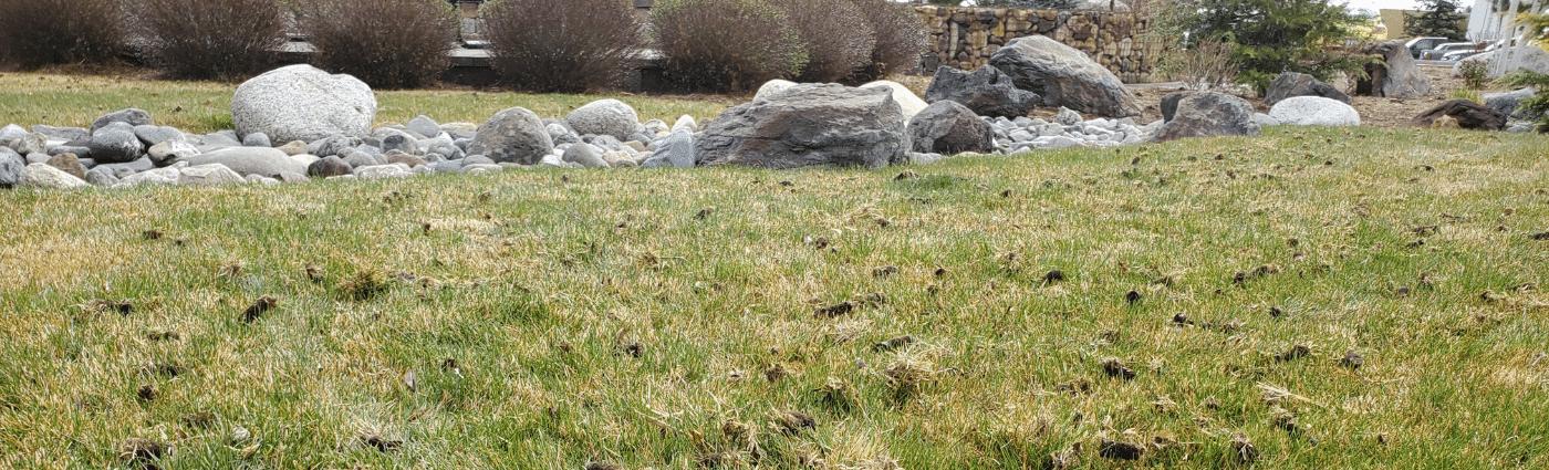 aeration lawn