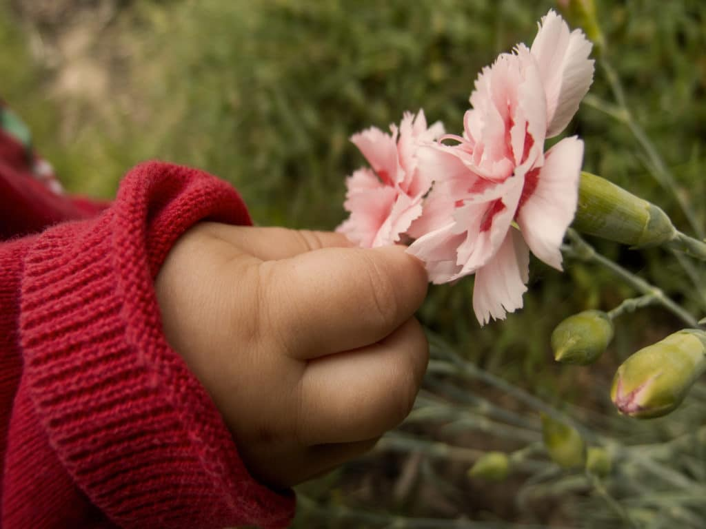 childs hand picking flower