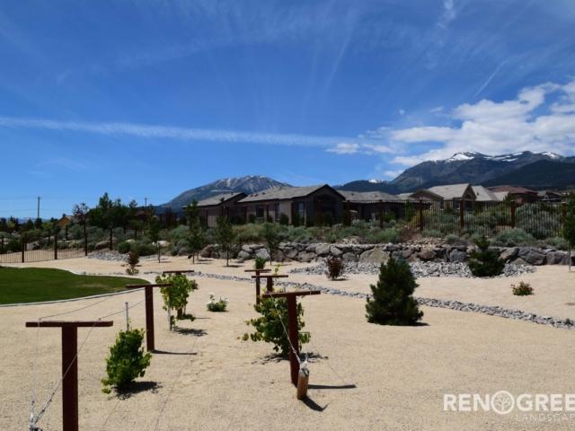 backyard vineyard xeriscape