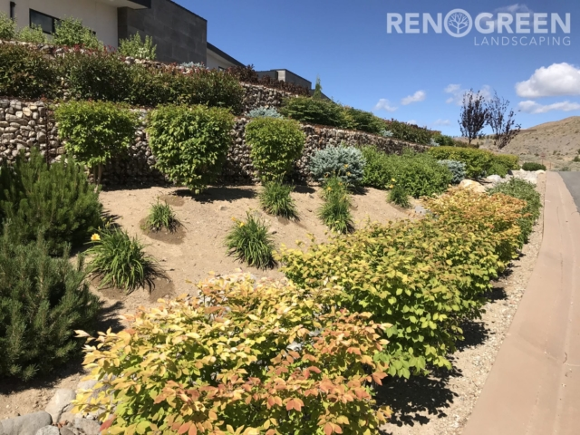 Xeriscape Front Yard