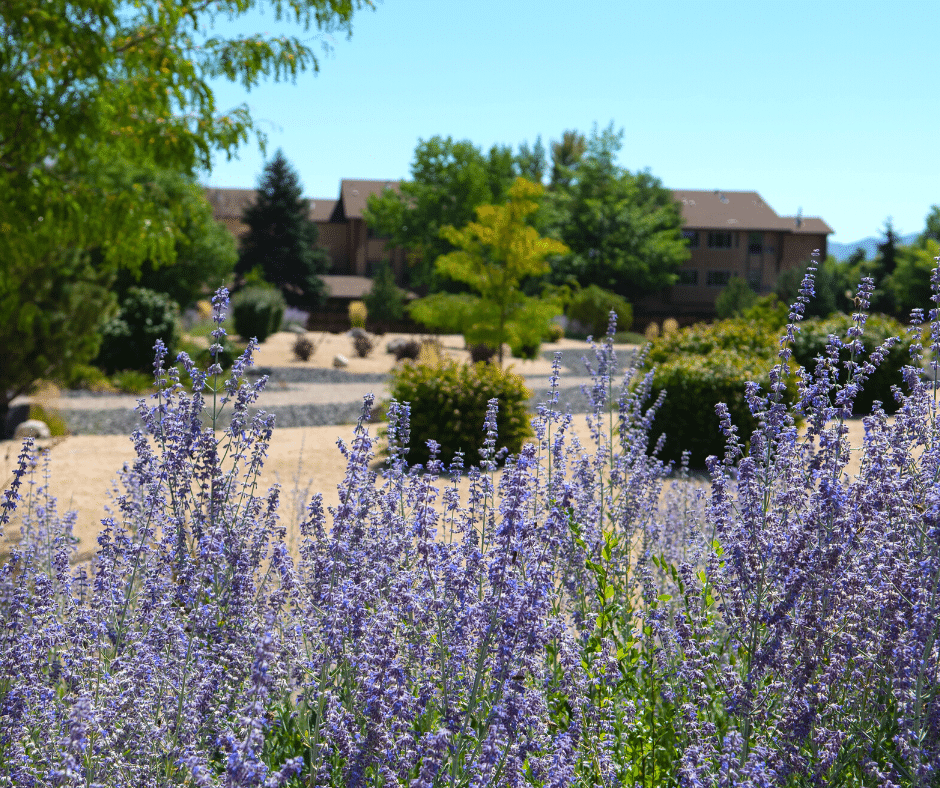 low water xeriscaping plants