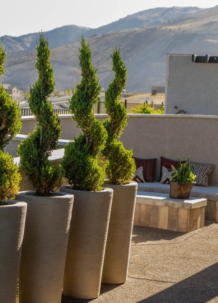 modern landscape plants