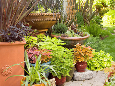how to pot plants in containers backyard containers
