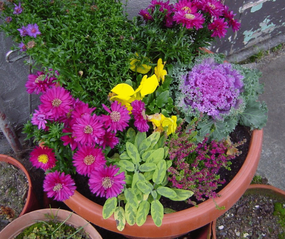 fall container plants Garden containers for every season
