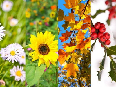 containers for every season