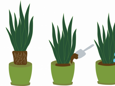 potting plants in containers