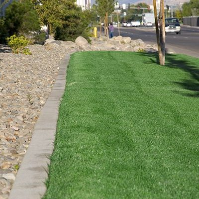 Turf Grass Pic 1